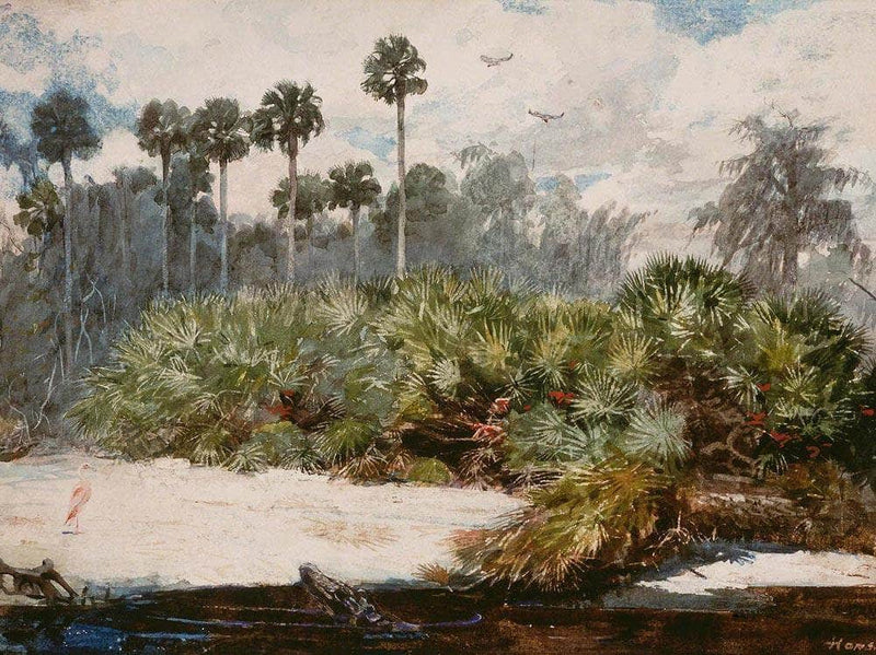 In A Florida Jungle By Winslow Homer