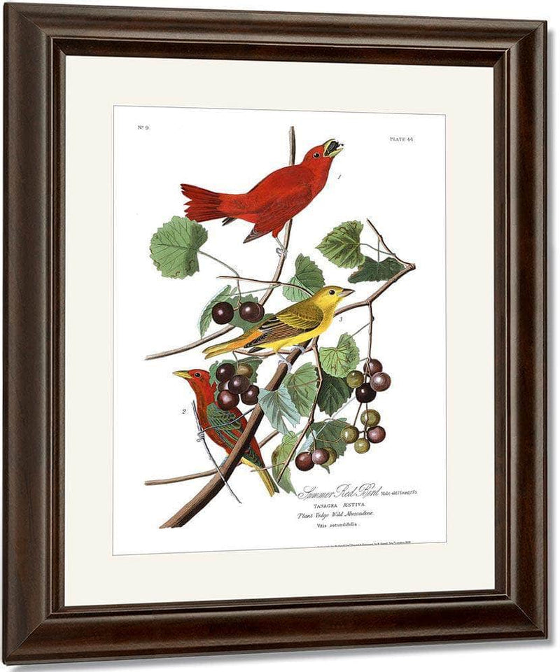 John James Audubon Arctic Tern Copy 7 1838 By John James Audubon