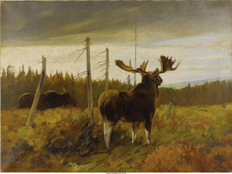 Moose In A Clearing By Carl Rungius