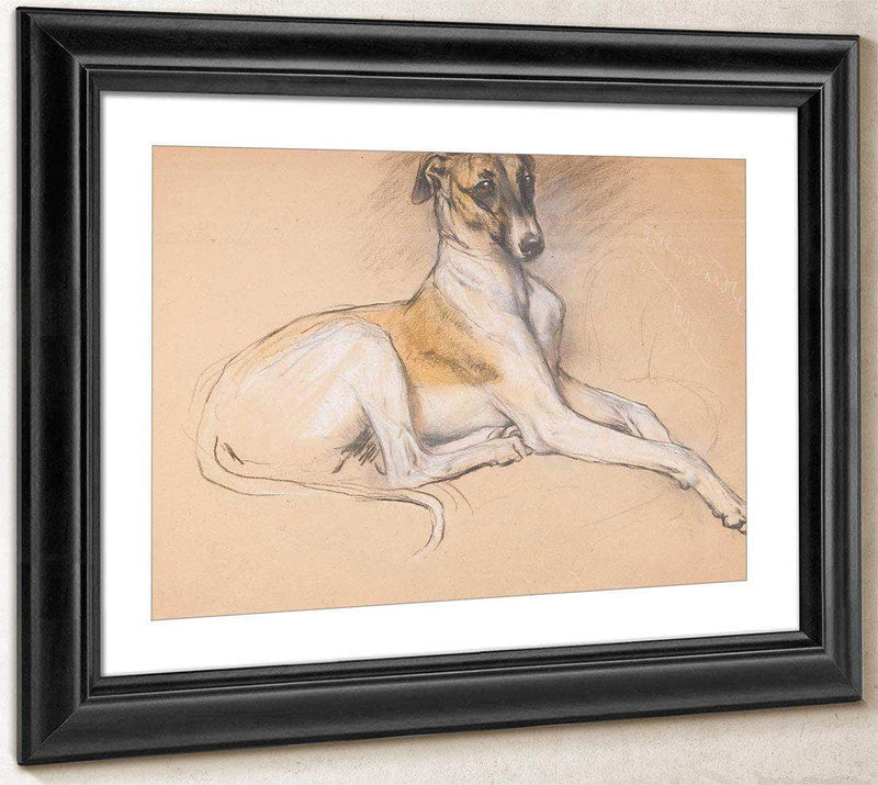 Studies Of A Greyhound By Arthur Wardle