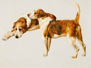 Studies Of A Hound By Arthur Wardle