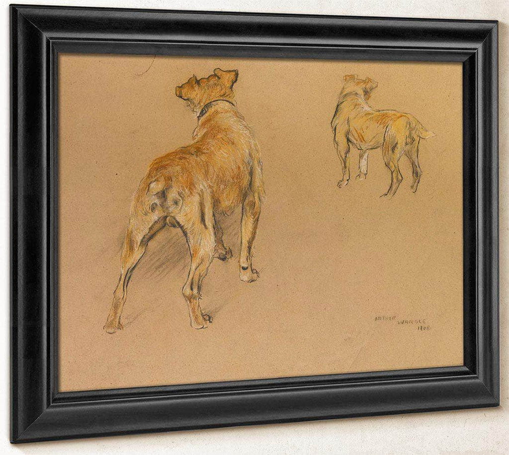 Studies Of A Terrier From Behind By Arthur Wardle