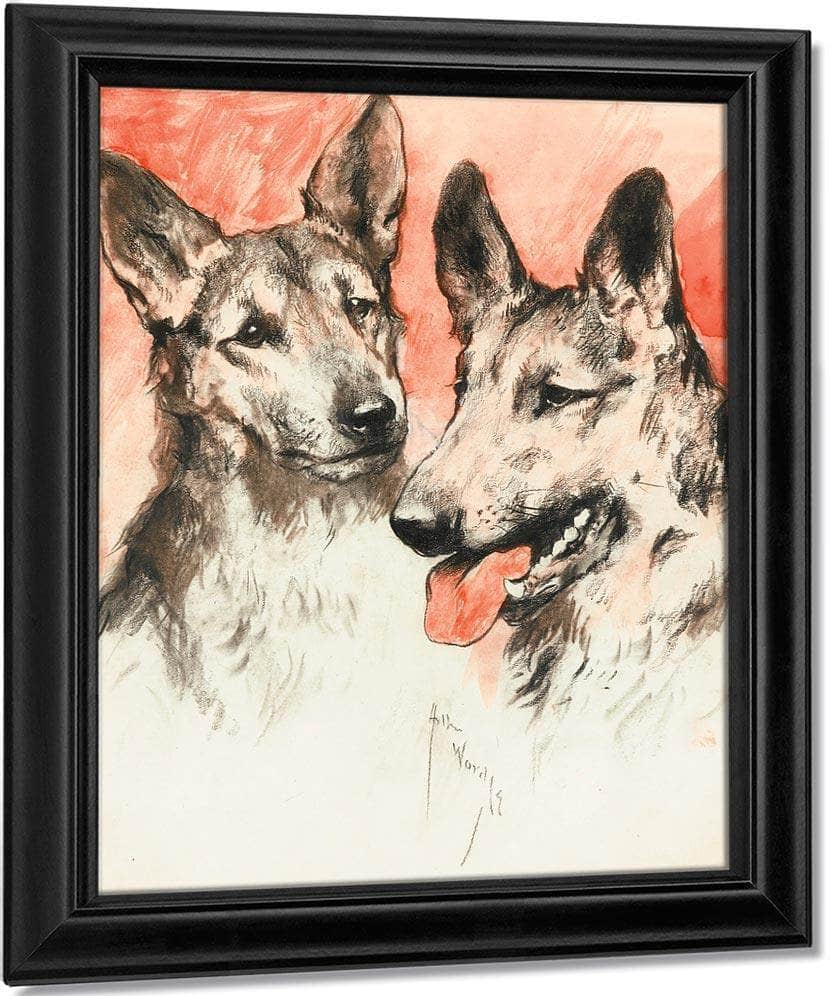 Study Of Two German Shepherds By Arthur Wardle