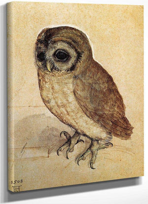 The Little Owl 1506 By Albrecht Durer