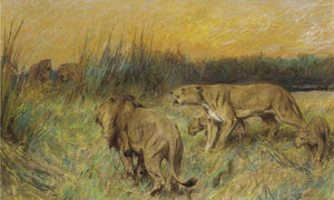 The Rival Pride By Arthur Wardle