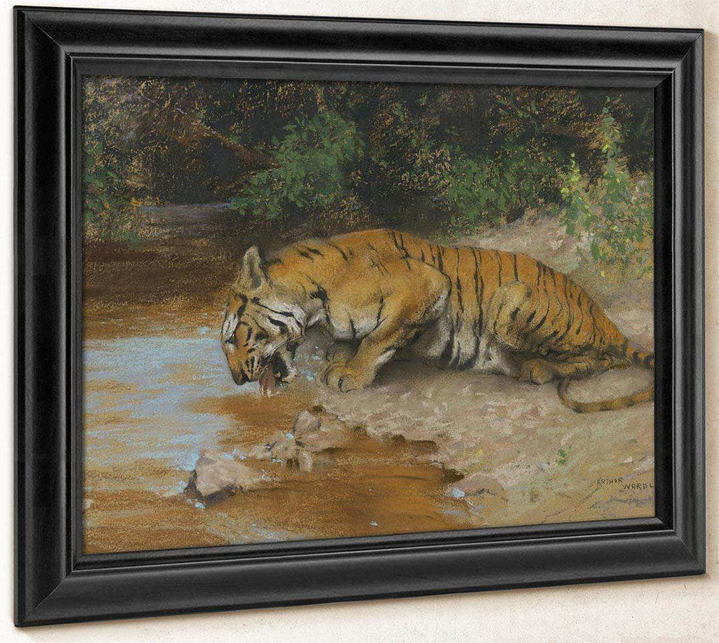 Tiger Drinking By Arthur Wardle