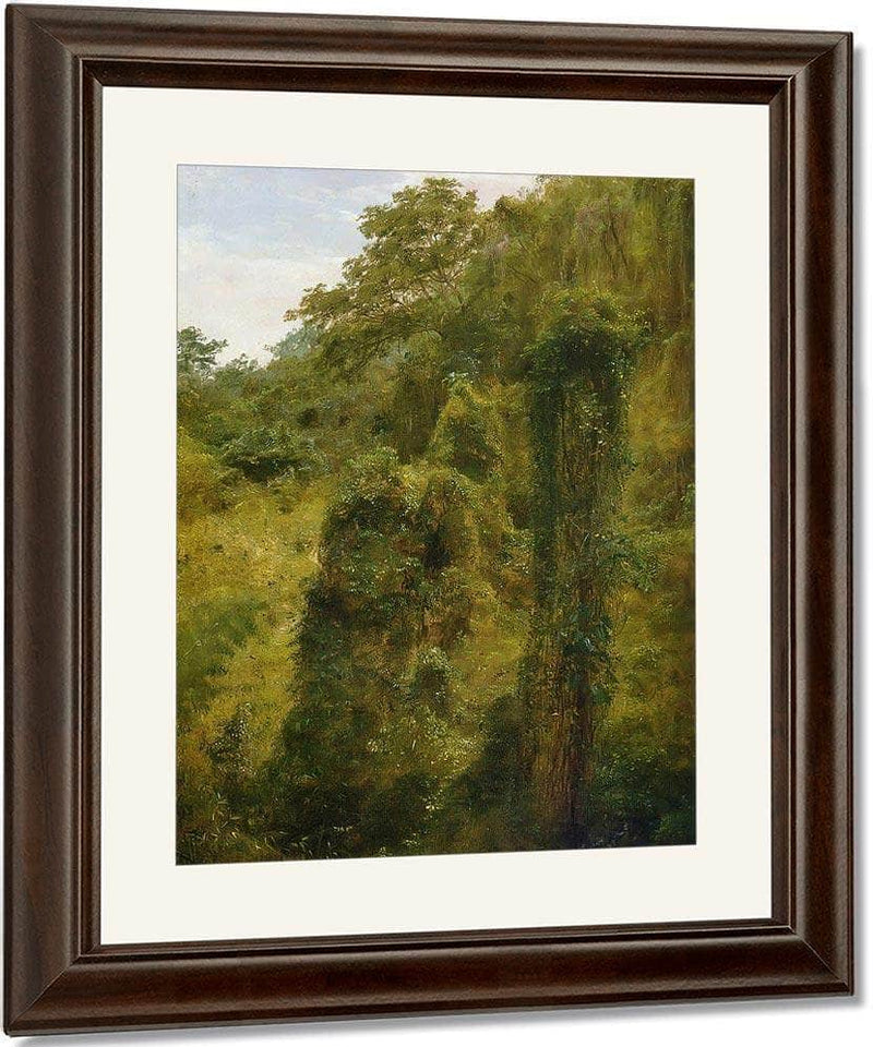 Tropical Vines And Trees Jamaica By Frederic Edwin Church