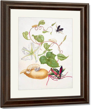 Tropical White Morning Glory With Two Beetles 1703 By Maria Sibylla Merian