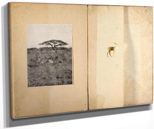 Two Antelopes, Study Folder For Book Concealing Coloration In The Animal Kingdom By Abbott Handerson Thayer