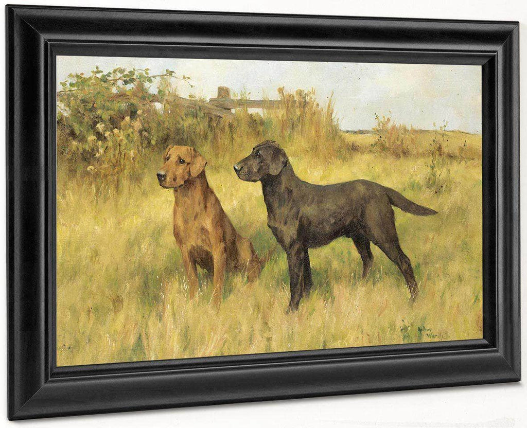 Two Labradors By Arthur Wardle