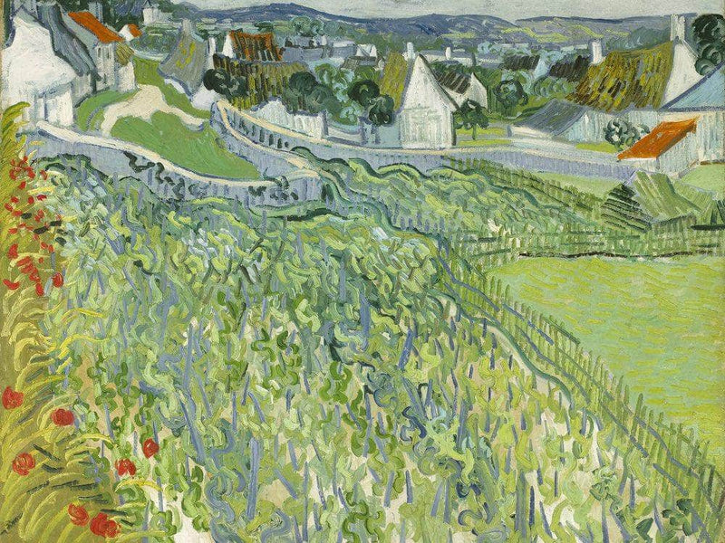 Vineyards At Auvers 3 By Vincent Van Gogh