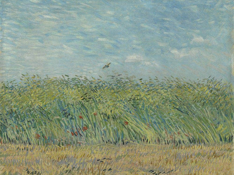 Wheatfield With Partridge By Vincent Van Gogh