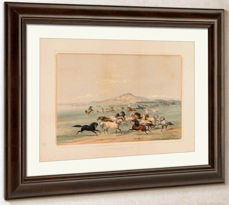 Wild Horses At Play  No. 3 By George Catlin
