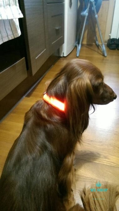 Necklaces Fluorescent luminous dogs, night-time flashing light - myshoponline.com