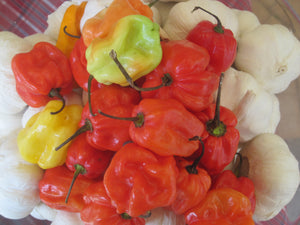 Load image into Gallery viewer, Scotch Bonnet Chilli Jam 200g