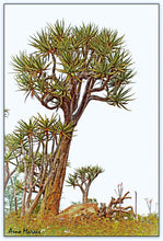 A Quiver Tree in Namaqualand - Promotion