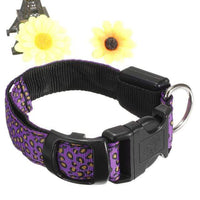 Plum LED Dog Collar in Leopard Pattern