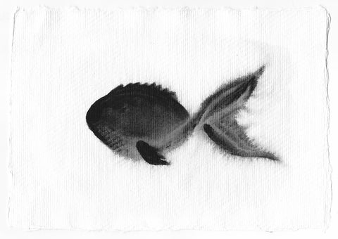 Shadow Fish - watercolour painting - Silvena Toncheva