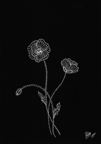 Poppies Drawing by artist Silvena Toncheva