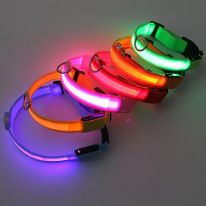 Best Led Dog Collar - USB Rechargable Dog Led Collar Led Dog Collar Timeless Matter
