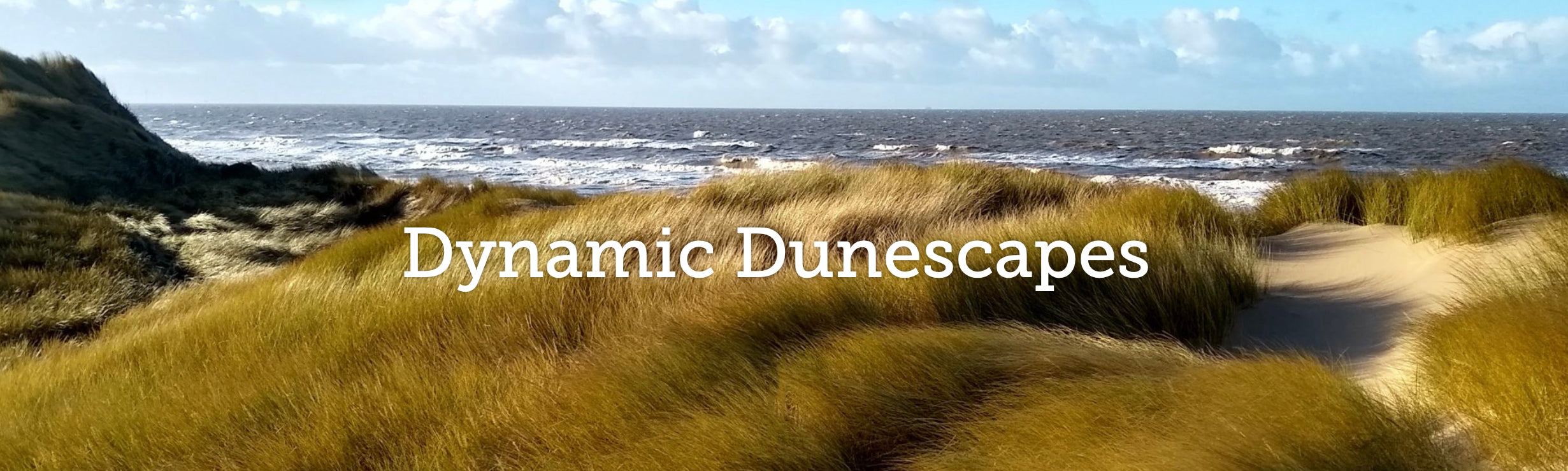 Dynamic Dunescapes