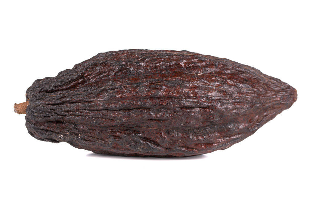 Dried Cacao Pod