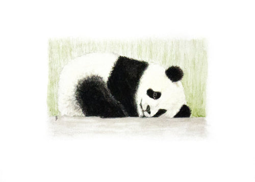 Young Panda - Limited Edition Print