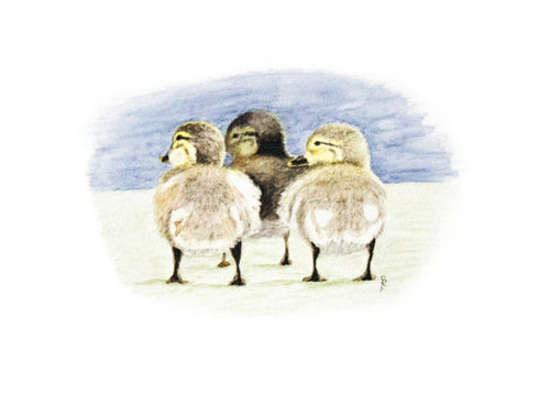 Trio of Ducklings - Limited Edition Print