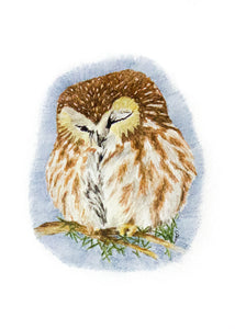 Sleeping Owl - Limited Edition Print