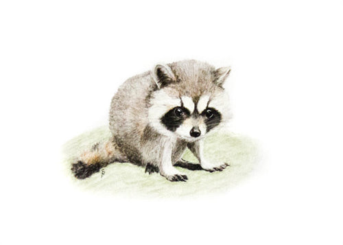 Li'l Raccoon - Limited Edition Print