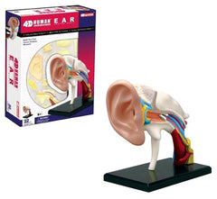 4D Human EAR Drum Canal Body Anatomy 3D Puzzle Model science Medical NEW For Ages 8+ 22 Piece Model with Stand and Assembly Guide