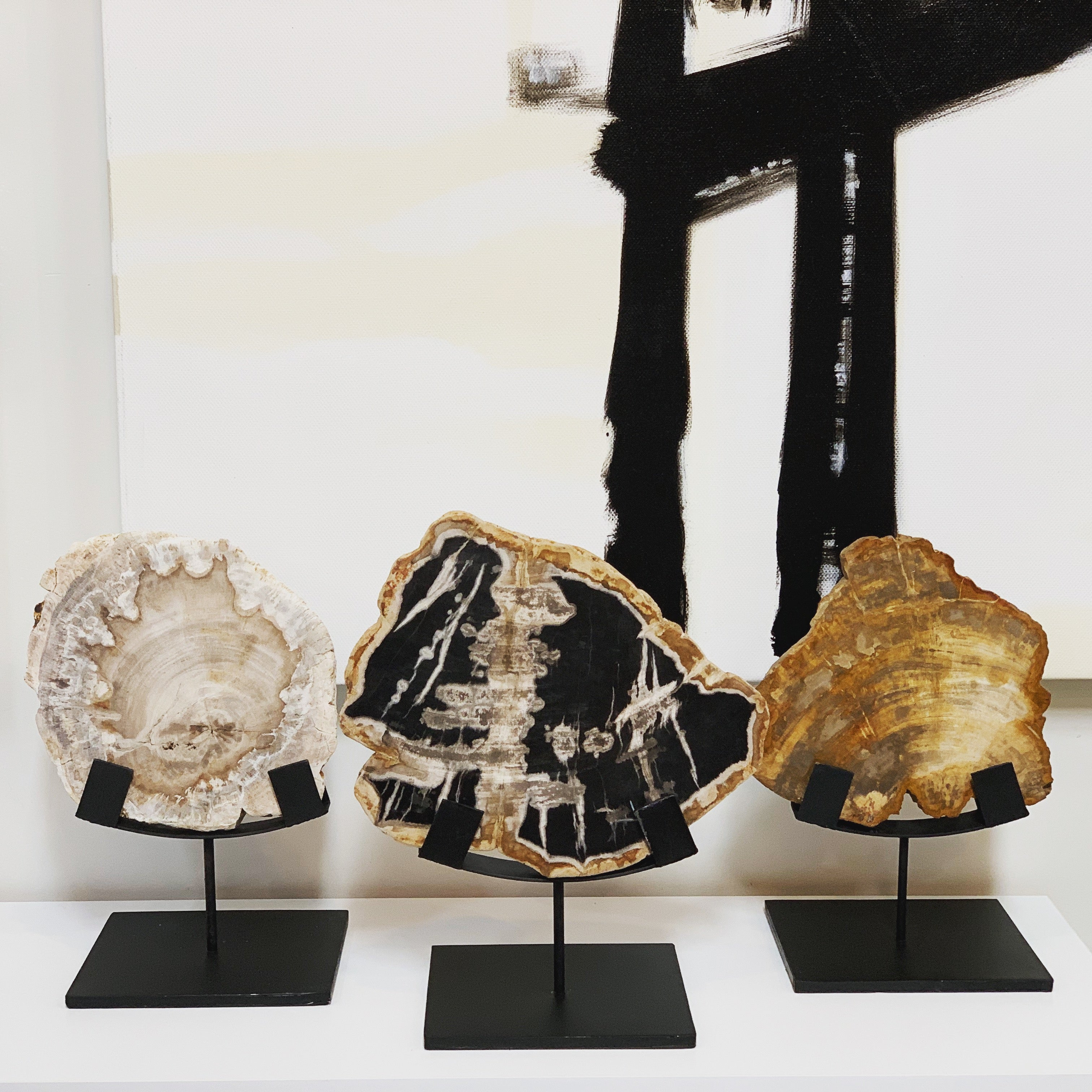 Petrified wood + display stand