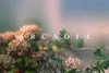 Arcadia, Ian Howorth - The Library Project
