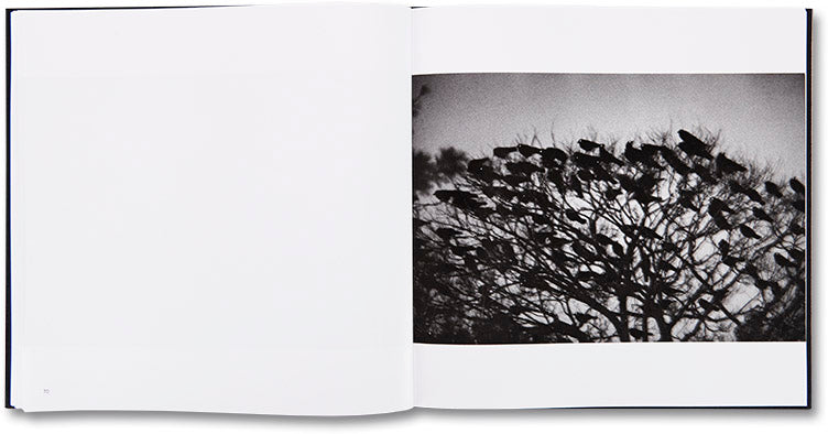 Ravens, Masahisa Fukase - The Library Project