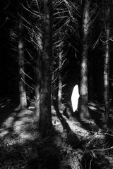 Solitary Spirit, Roisin White (Framed) - The Library Project
