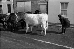 Puck Fair Killorglin, Ireland 1984-1992 - The Library Project