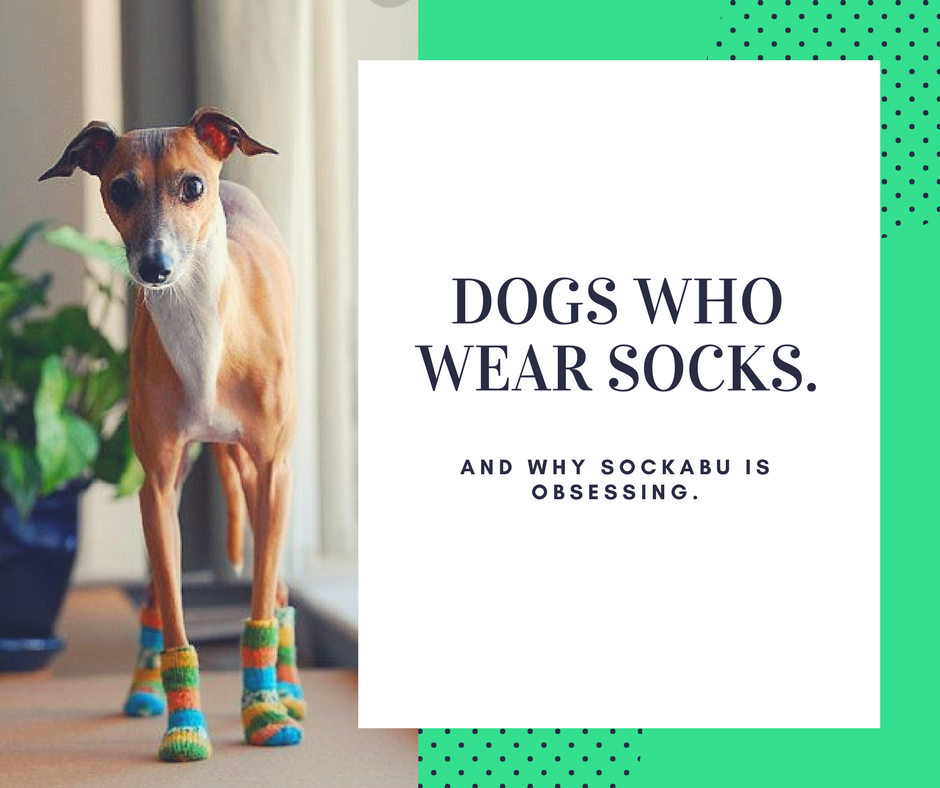 Cute Puppies Wearing Socks!