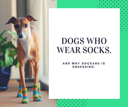 Cool socks and cute dogs