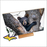 Wildlife Bear Cub-1260 ~ Michigan Photo Tiles & Gifts