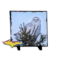 Snowy Owl Rustic Photo Slate Michigan Upper Peninsula Wildlife Gifts & Collectibles