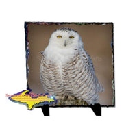 Snowy Owl 8x8 Rustic Photo Slate Unique Wildlife gifts & Collectibles