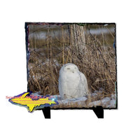 Snowy Owl Rustic Photo Slate Best Wildlife gifts & Collectibles