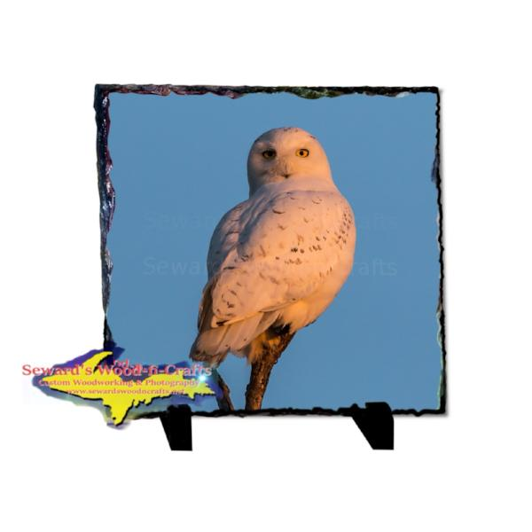 Snowy Owl Rustic Photo Slate Wildlife Photo Gifts & Collectibles