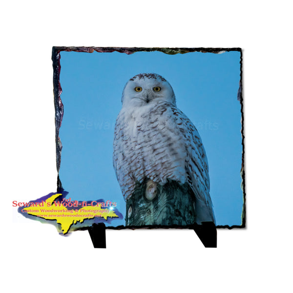 Snowy Owl 8x8 Rustic Photo Slate Great Wildlife gifts & Collectibles