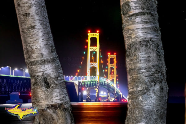 Michigan Photography Mackinac Bridge Nightscape with birch trees photo