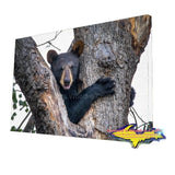 Wildlife Bear Cub-1260 ~ Michigan's Canvas Prints