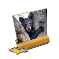 Wildlife Bear Cub-1260 ~ Drink Coaster & Collectibles