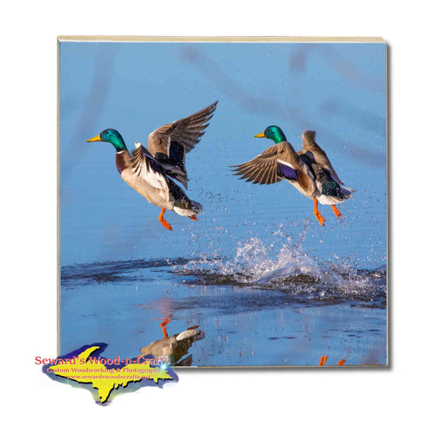 Michigan Wildlife Drink Coasters Mallard Duck Michigan Made Gifts