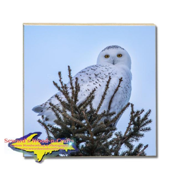 Snowy Owl Drink Coasters Michigan Made Wildlife Gifts & Collectibles