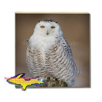 Michigan Drink Coasters Wildlife Snowy Owl Michigan Made Gifts & Collectibles